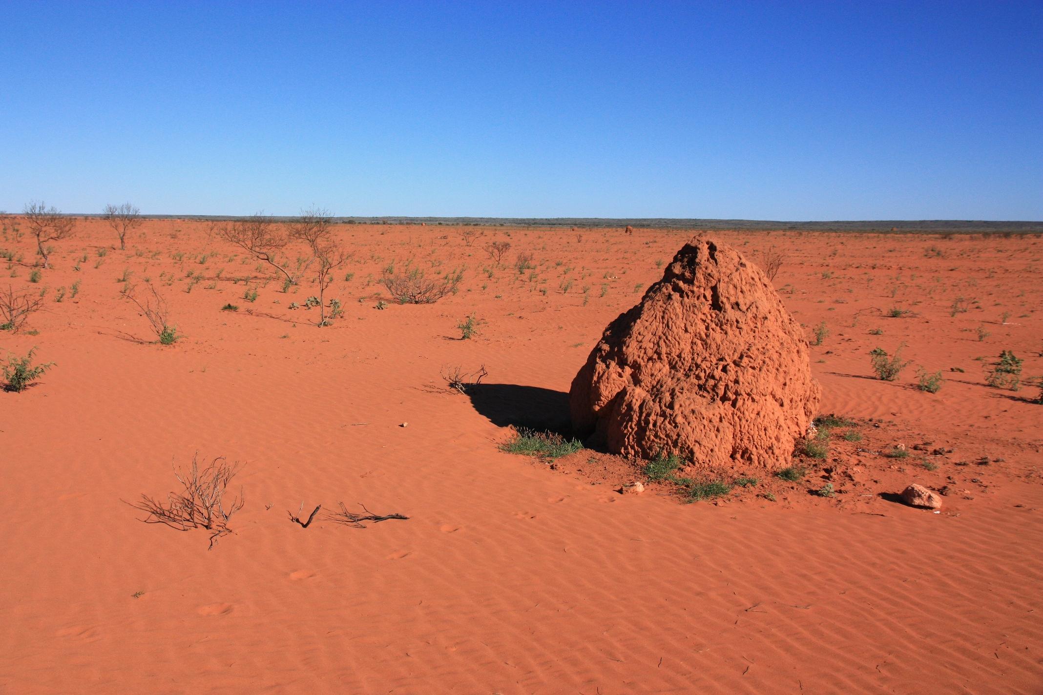 R_desert