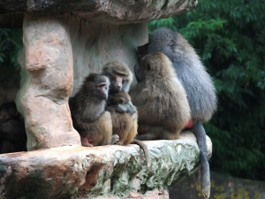 U_monkeys