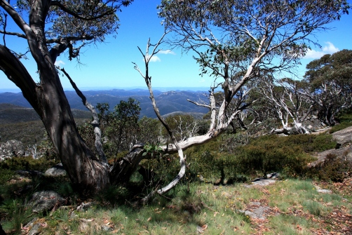 Out back of Canberra, the Brindabella Ranges rise close to 2,000 metres and form part of a vast wilderness area eventually stretching all the way into Victoria